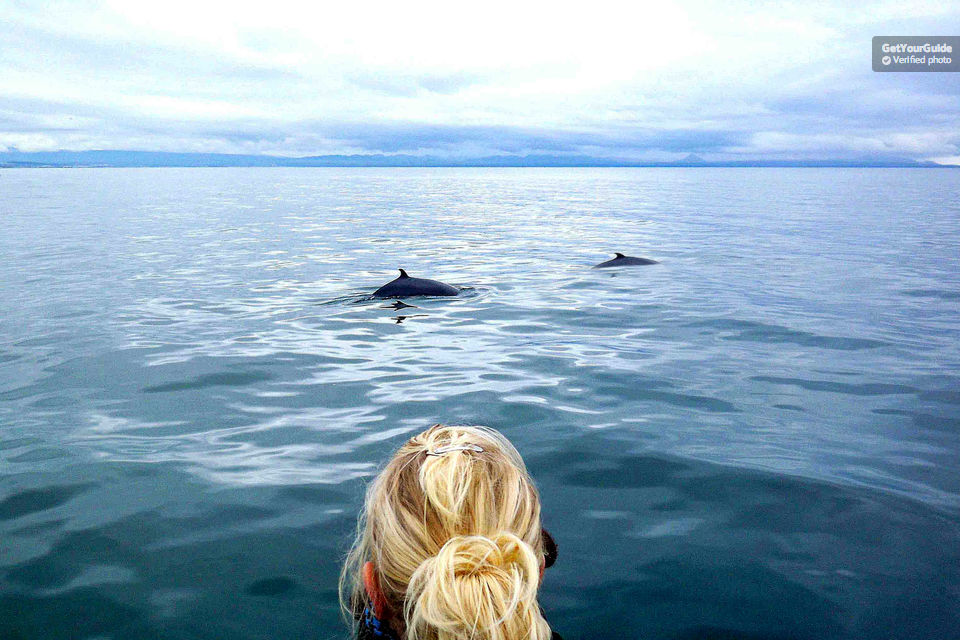 Join-a-Whale-Spotting-Excursion