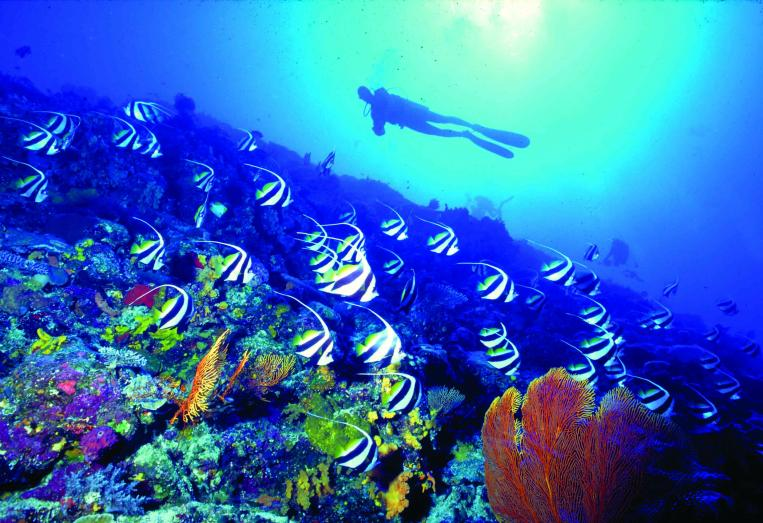 Discover-an-underwater-world-with-some-snorkelling