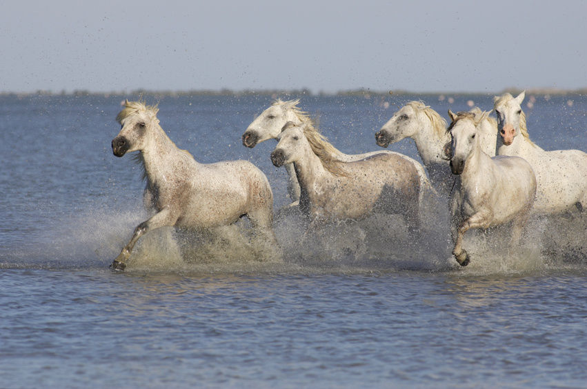Visit-Camargue-National-Park