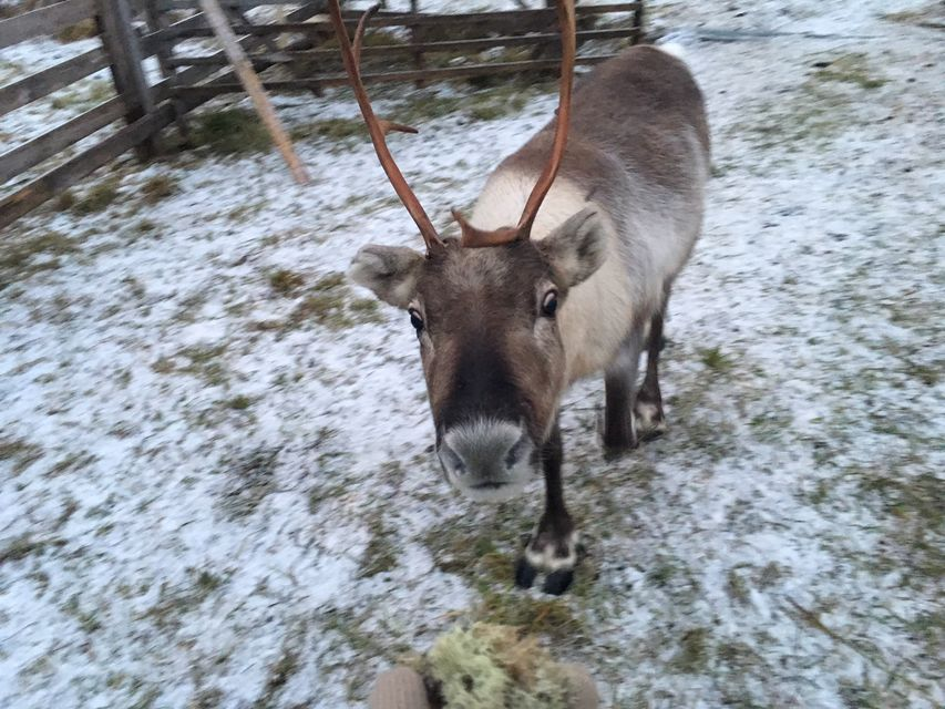 Get-Friendly-with-Reindeer