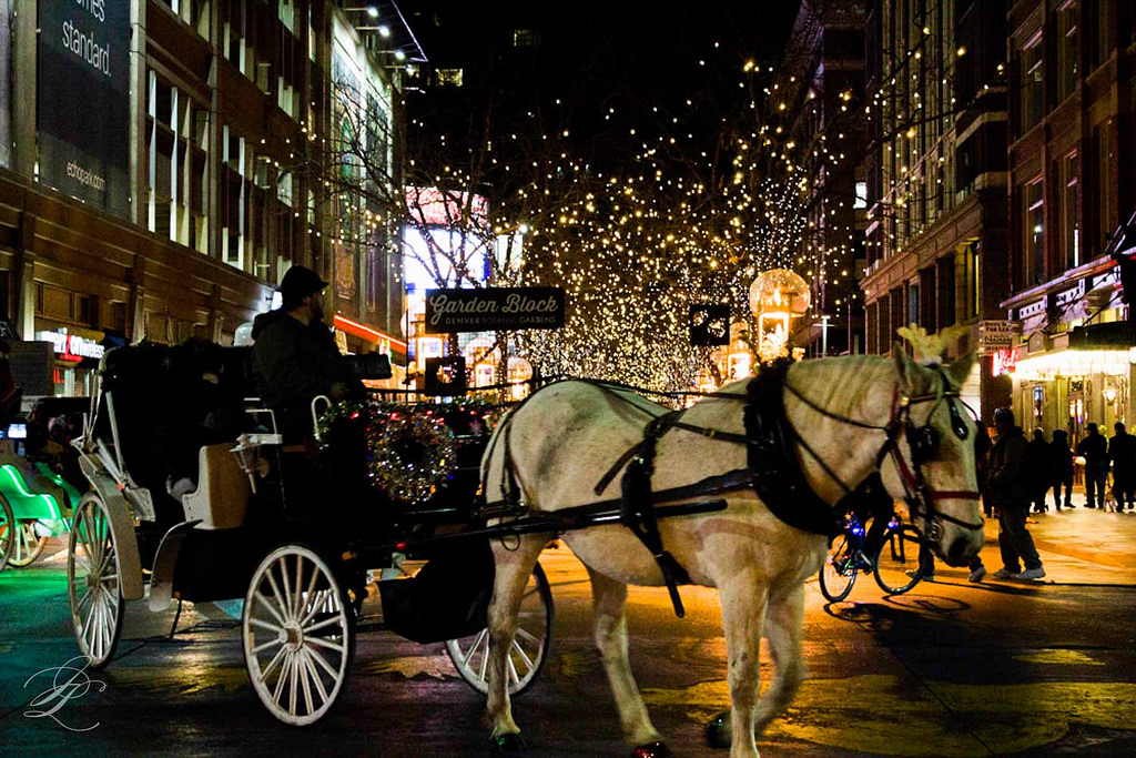 Snuggle-Up-in-a-Horse-Drawn-Carriage