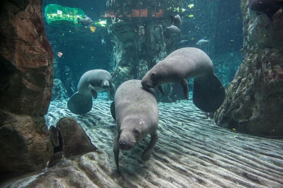 Watch-Ocean-Life-at-Aquario-Village