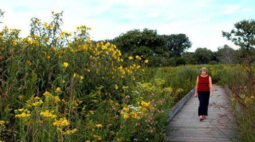 Stroll the Chicago Botanic Garden