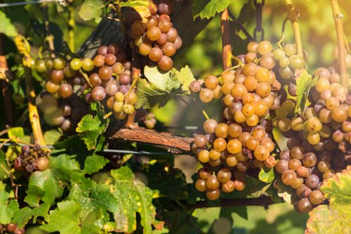 Tour the Michigan Wine Country, Illinois