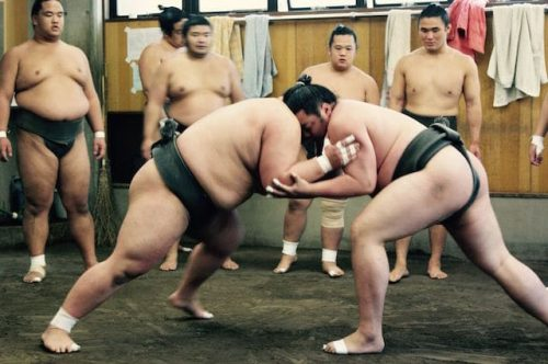 Watch a Sumo Wrestling Match