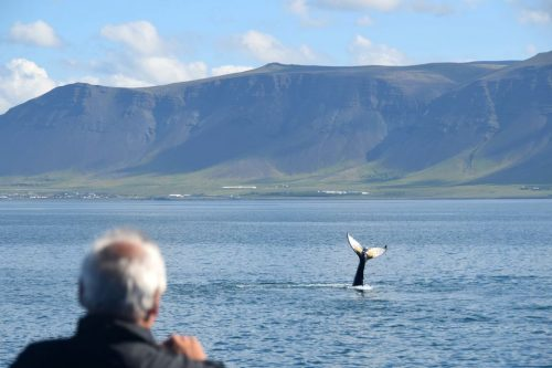 Whales and Puffin Tour