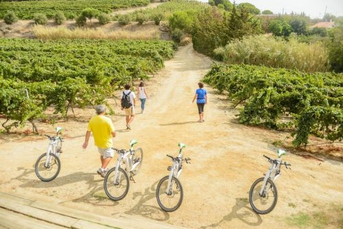 Alta Alella Wine Tour by Electric Bike