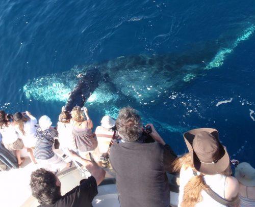 Newport Beach Whale Watching Tour