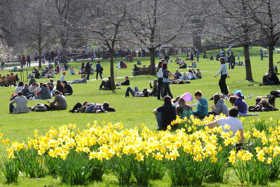 Daffodils in St James Park Over