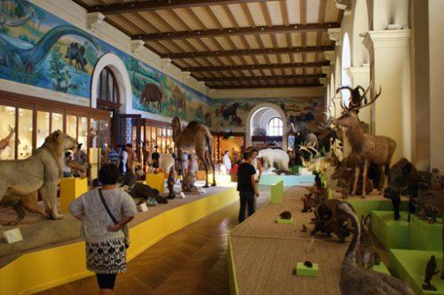 Muséum d'histoire Naturelle de Marseille