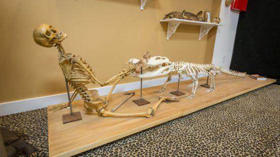 Museum of Death
