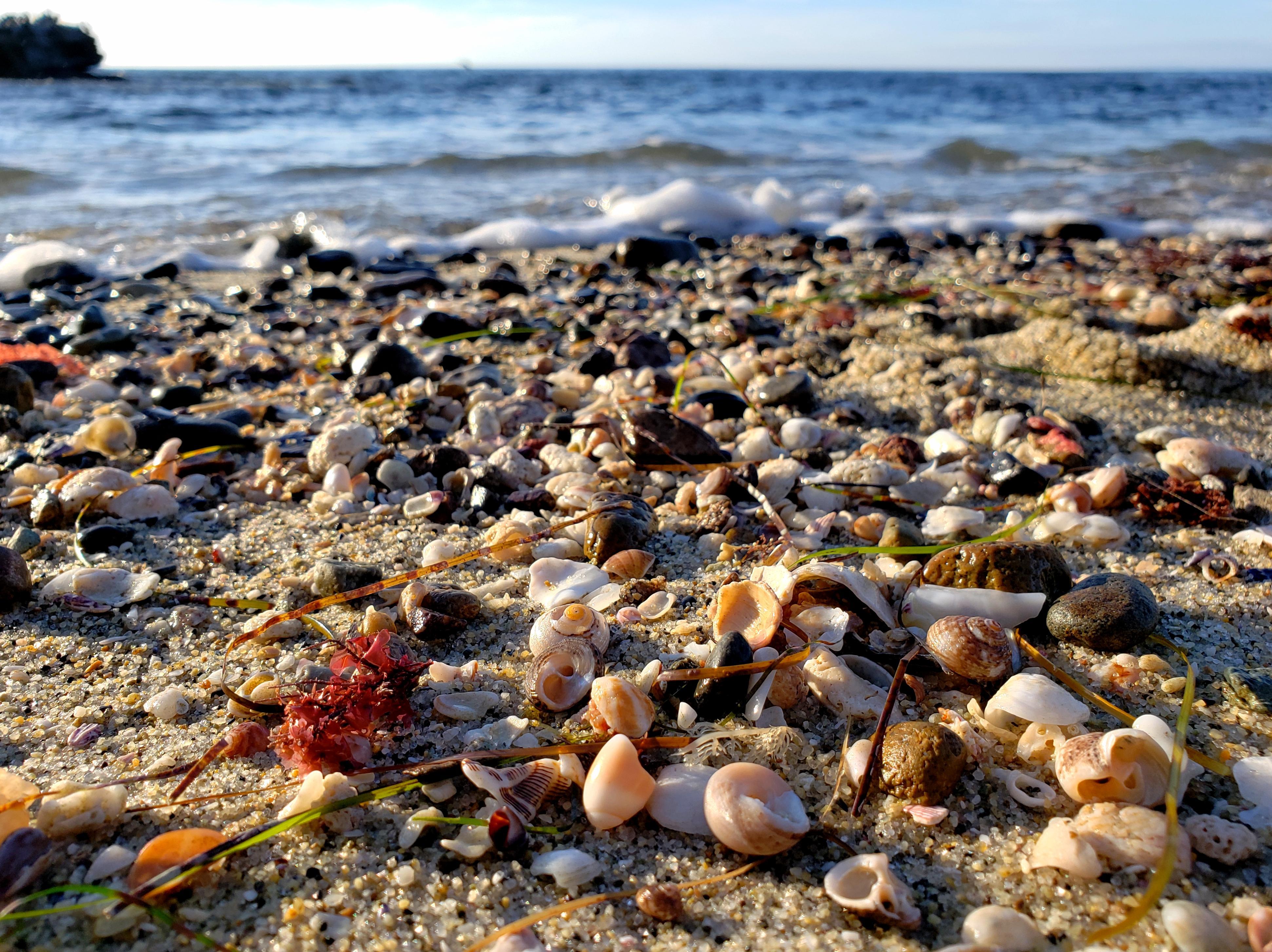 Shell Beach, New Orleans