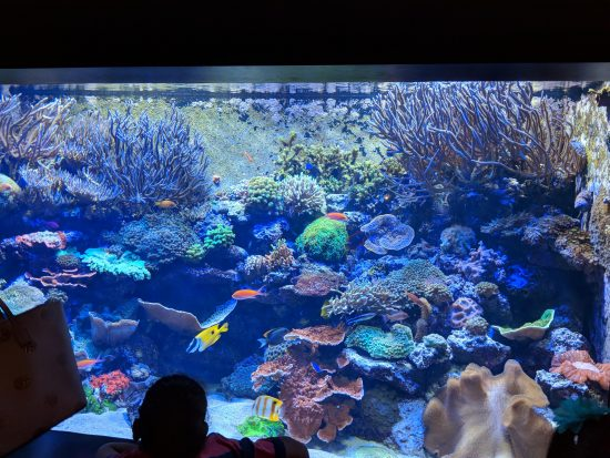 Aquarium in Chattanooga, Tennessee