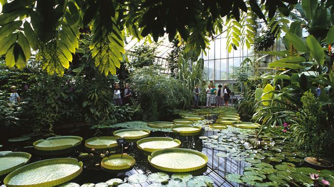 Enjoy a Peaceful Moment in the Royal Botanic Garden
