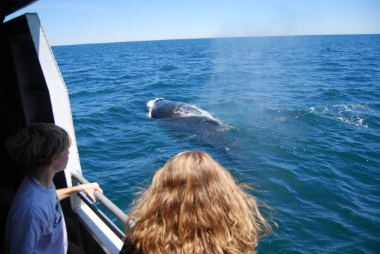 Go Whale-Watching