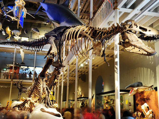 Learn Something New at the National Museum of Scotland