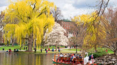 Relax in the Boston Public Garden