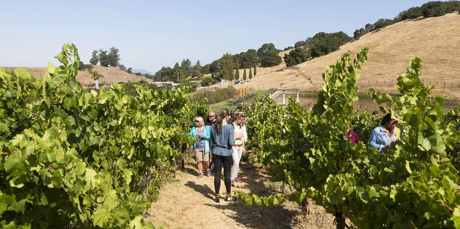 Sample Sonoma and Napa Valley Wine