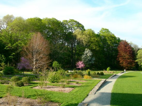 Spend Time Outside at the Arnold Arboretum
