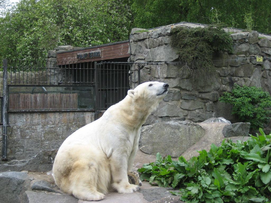 History of Edinburgh Zoo
