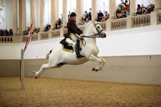 History of the Spanish Riding School