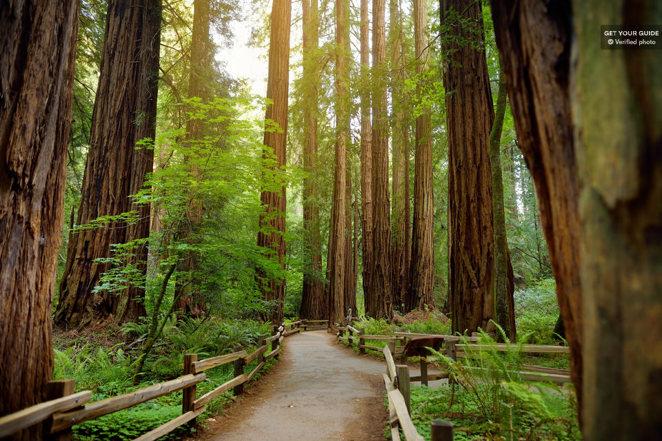 Muir Woods National Monument Tour