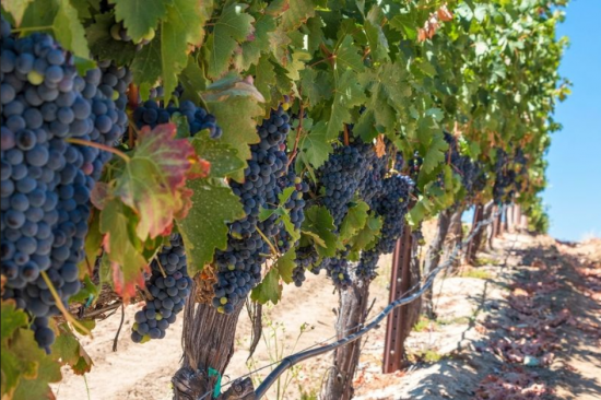 Temecula Wine Tour With Tastings and Lunch