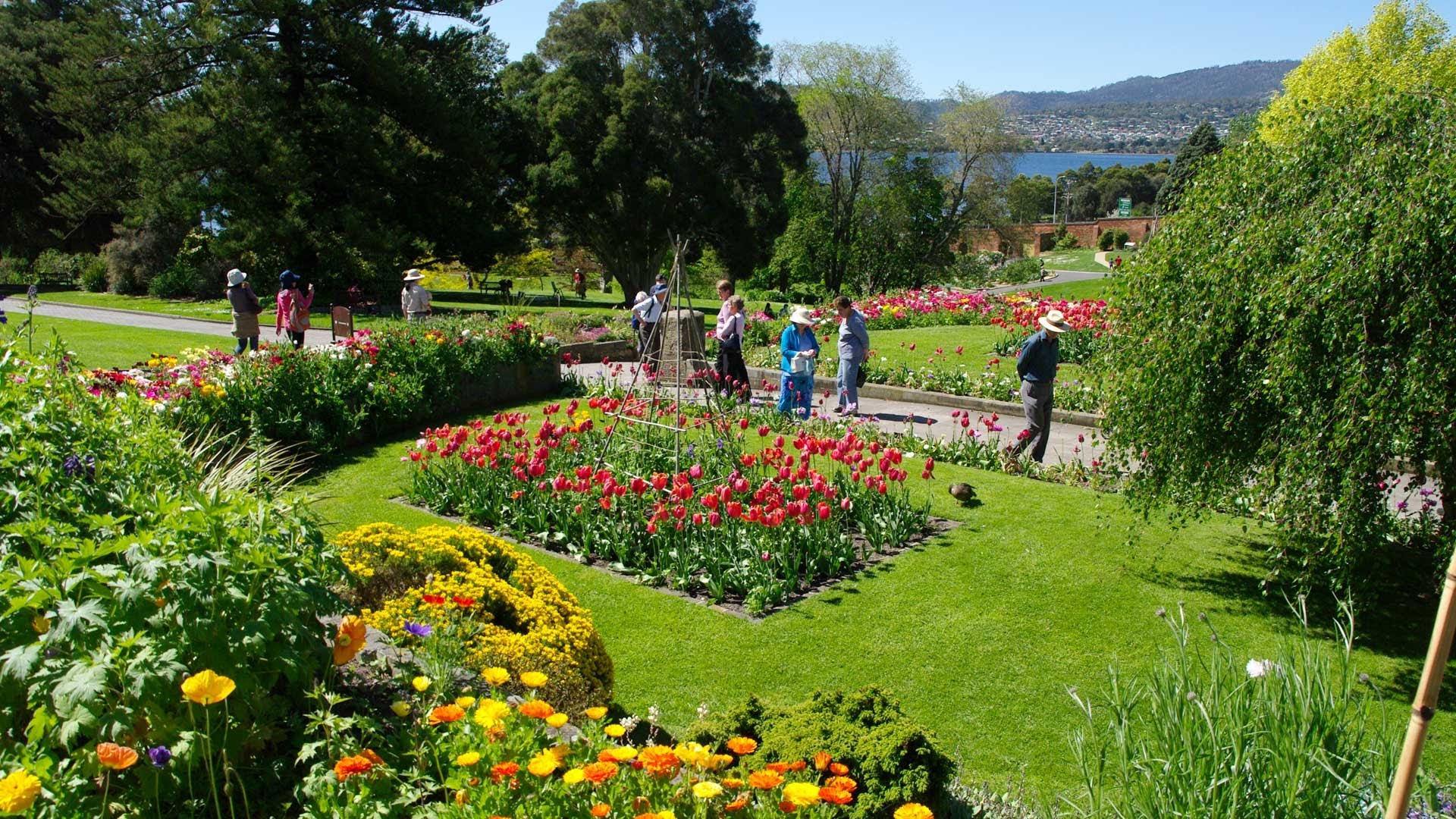Visit the Royal Tasmania National Botanical Gardens