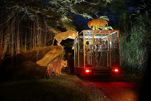 Check out Night Safari