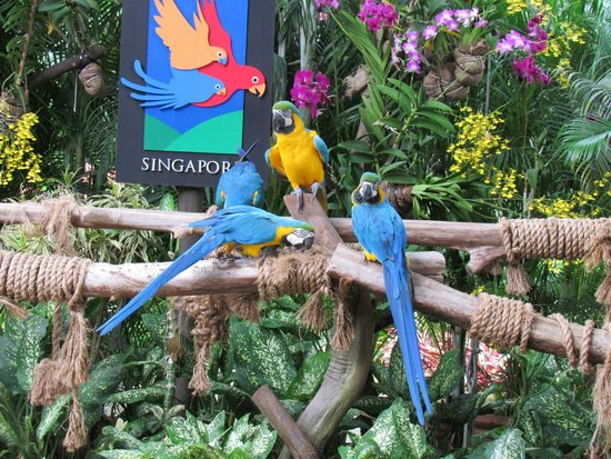 Hit Jurong Bird Park